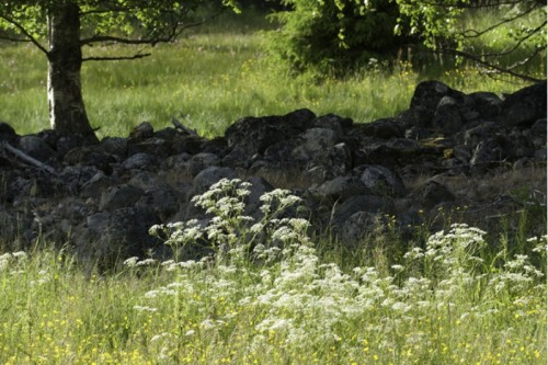 Midsommar Lugnets hagmarker